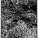 Linoryt, 41x34,7cm, 1986
