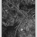 Linoryt, 37,5x28,5cm, 1988r.